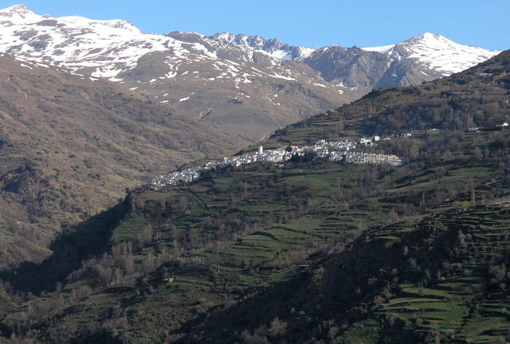 1-CAPILEIRA